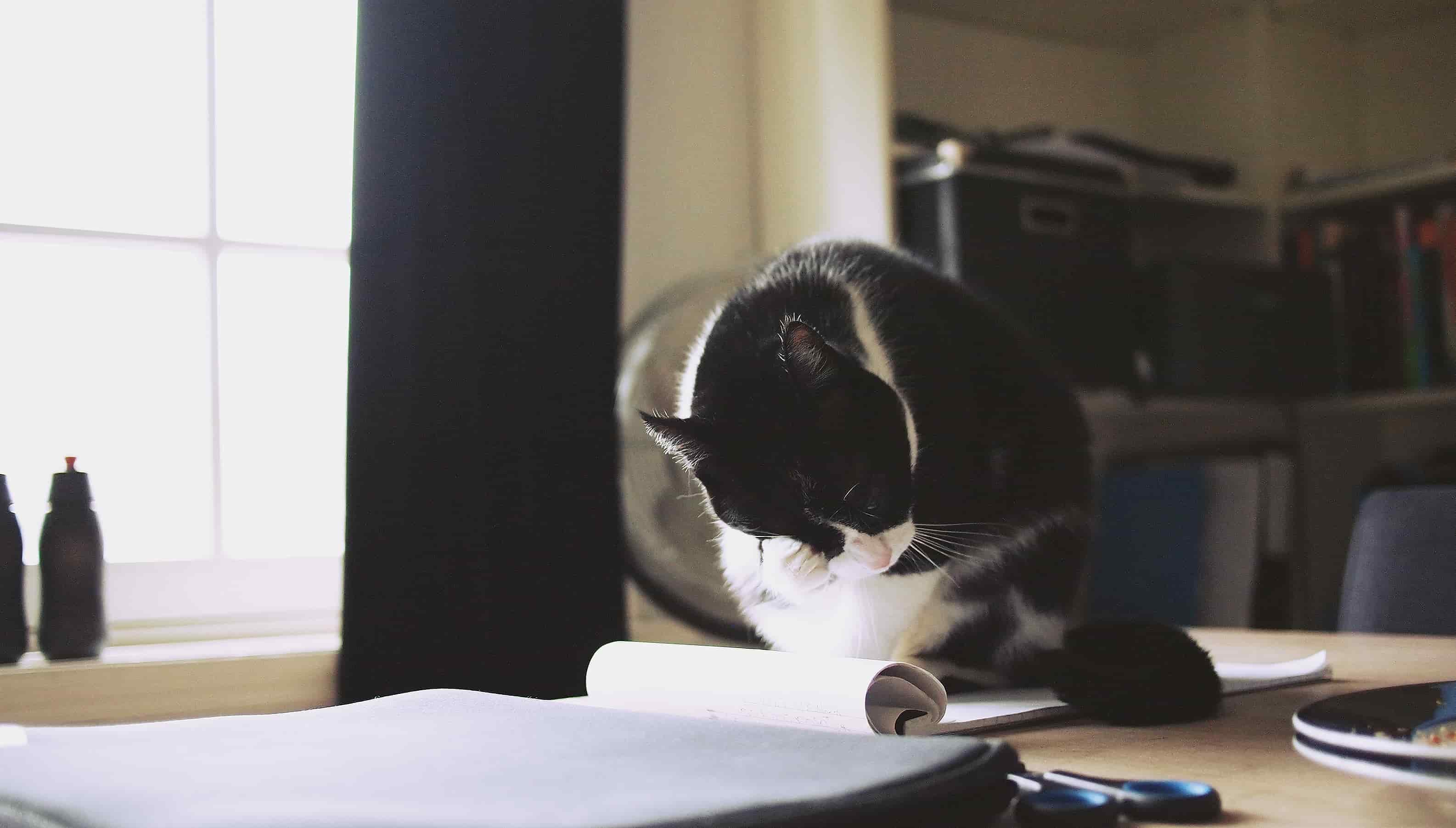 Cat, Credit Daria Nepriakhina
